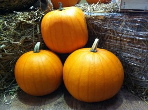 Pumpkins, Square, Mussy Boots, Scotland